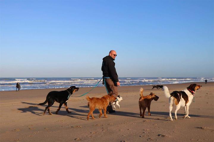 Mister Dog op het strand