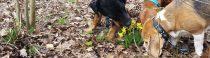De middagploeg snuffelt voorzichtig aan de lente
