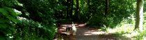 Een warme donderdag in de bosjes
