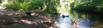 Vrijdagmiddag in de bosjes van Zanen / Clingendael