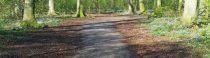 Vrijdagmorgen in het bos