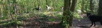 De dinsdagochtendploeg in het bos