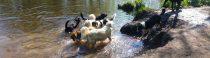 Vrijdagmorgen, hondenbos Landgoed Clingendael