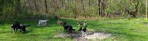 Een donderdag in de Scheveningse Bosjes
