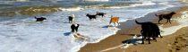 Maandagmorgen, zon, zee & zand (en een parkeerprobleempje plus een weerbarstige husky)