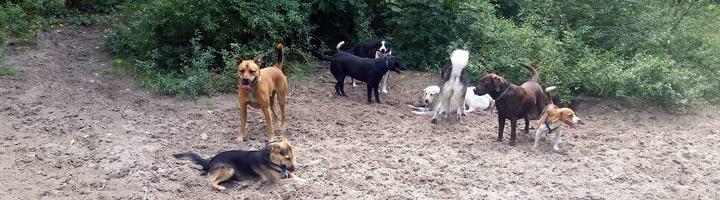 hondenuitlaatservice scheveningse bosjes