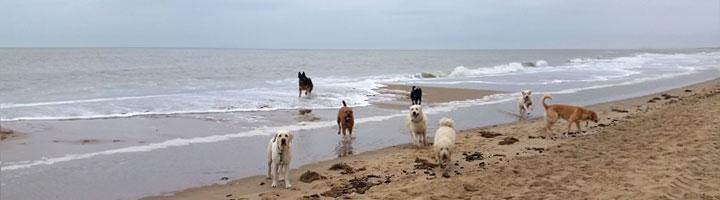dog walker scheveningen beach