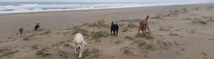 donderdagmiddag op het strand
