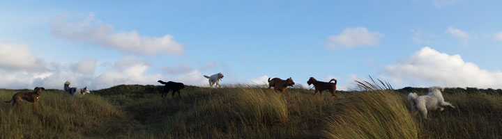 Hondenuitlaatservice Den Haag Scheveningen Mister Dog