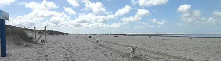 Mister Dog hondenuitlaatservice Den Haag Scheveningen
