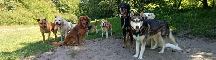 Mister Dog hondenuitlaatservice Scheveningse Bosjes Den Haag