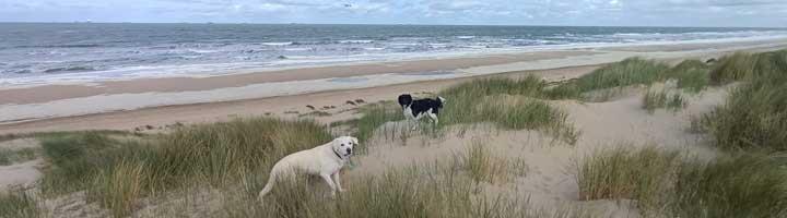 Hondenuitlaatservice Scheveningen den Haag Mister Dog