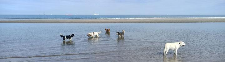 Mister Dog uitlaatservice Den Haag Scheveningen