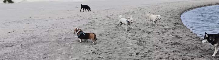 Mister Dog hondenuitlaatservice Den Haag