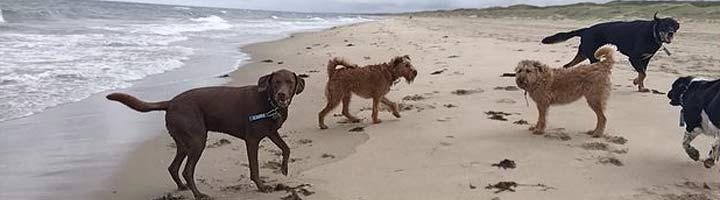 hondenuitlaatservice Zwarte Pad Scheveningen
