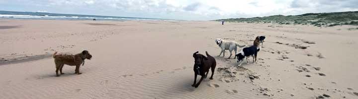 dog walking service The Hague Scheveningen