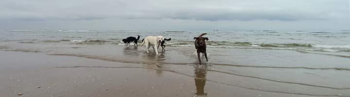uitlaatservice Scheveningen strand