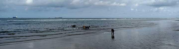 hondenuitlaatservice Scheveningen strand Zwarte Pad