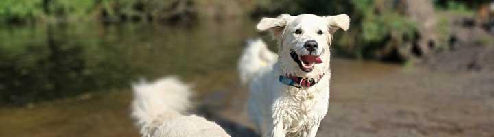 Hondenuitlaatservice Den Haag Meer en Bos