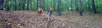 Donderdag in de bosjes
