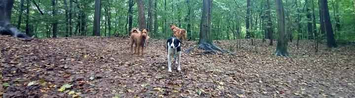 Mister Dog uitlaatservice Scheveningse Bosjes Den Haag