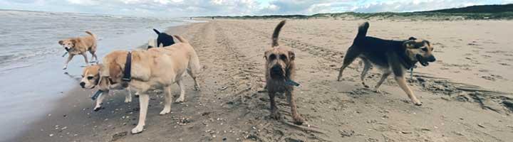 strandwandelen op donderdag