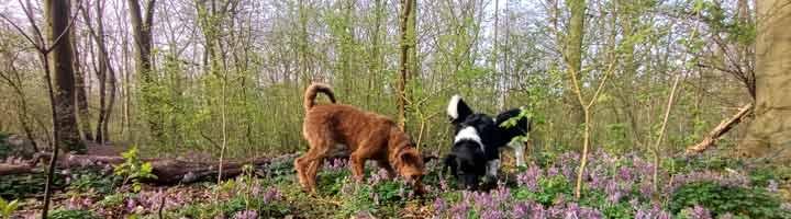 hondenuitlaatservice Den Haag